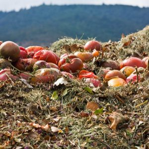 Learn more about commercial composting for your restaurant!