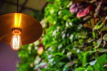 From Roof to Restaurant: Starting an On-site Restaurant Garden