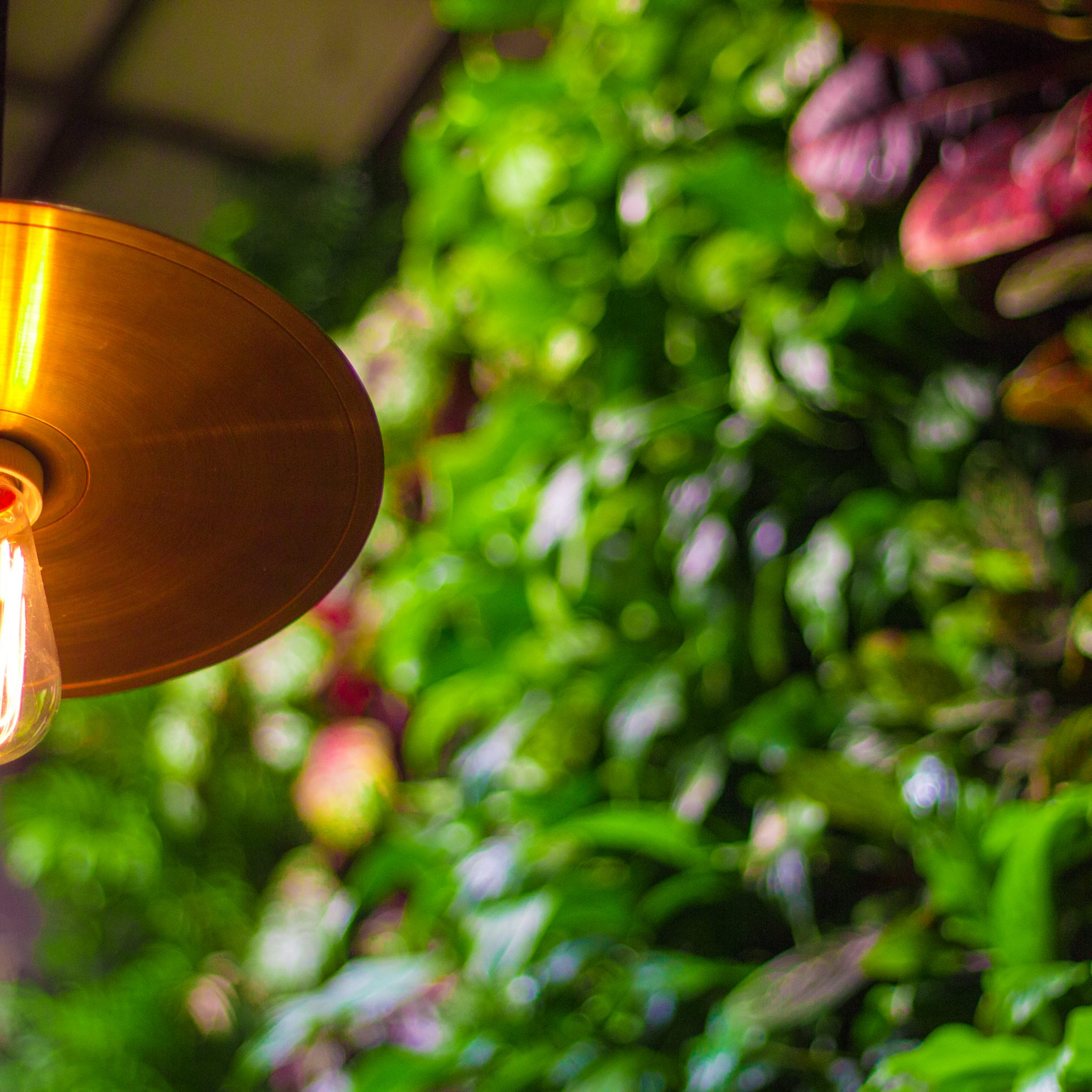 on-site restaurant garden edison light bulb fixture