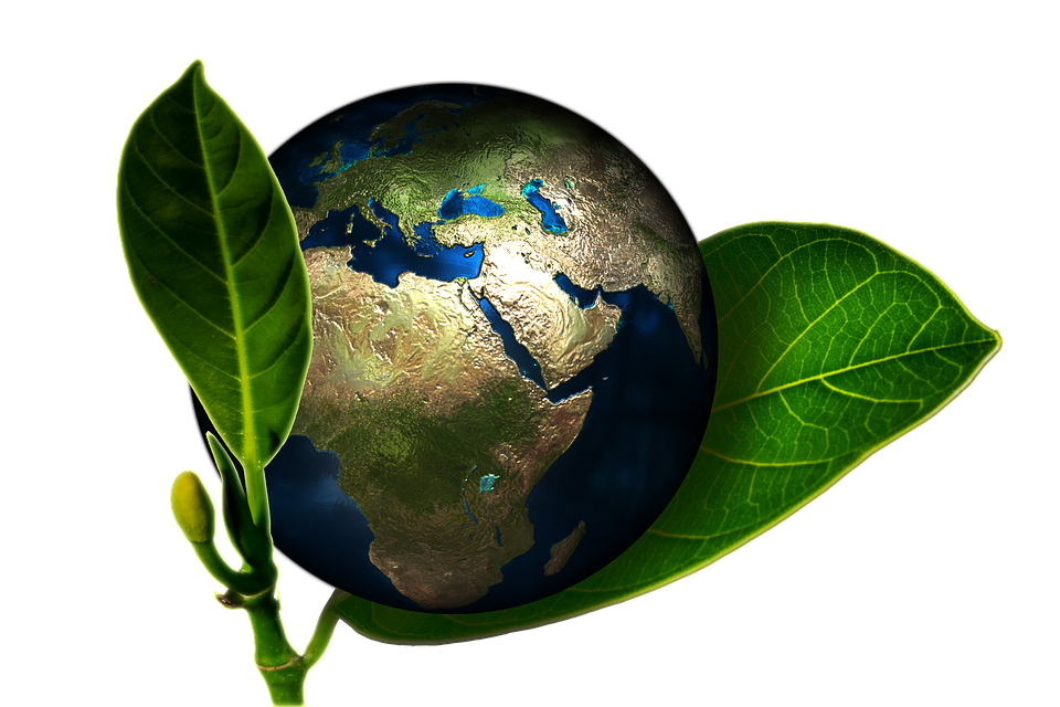 sustainable business green earth