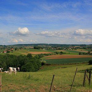 Saison beer originated in the Wallonia region of Belgium.