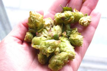The Secret to Homegrown Hops