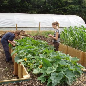 A great practice for holistic health and wellness at your health care facility is to have raised or waist high garden beds.