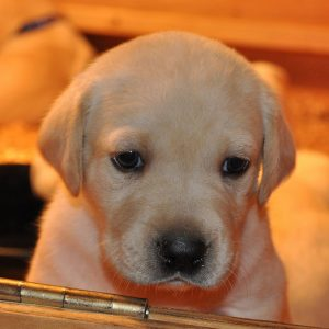 This little puppy is thinking you should consider allowing pets! Just one more property rental improvement tip!