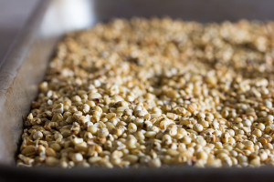 gluten-free beer grains toasted sorghum brown rice oats