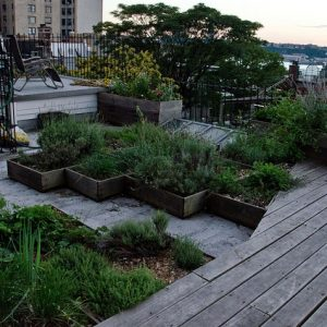 Creating a beautiful rooftop garden space is a perfect way to start a green initiative in your business.