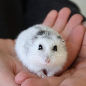 Look how sweet this tiny hamster is? Don't you want him to have a home in your apartment complex? Consider pet-friendly rental.