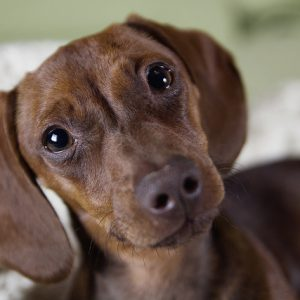 This sweet little guy hopes you'll consider pet-friendly rental options in your apartment complex!