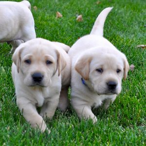 Consider adopting a pet-friendly rental property and you might get to see more cute puppies!