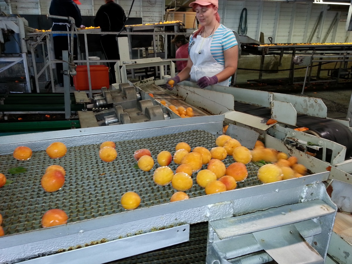 Contamination can occur any time before, during, or after food is processed at your plant, which is why sanitation is so important in food plants